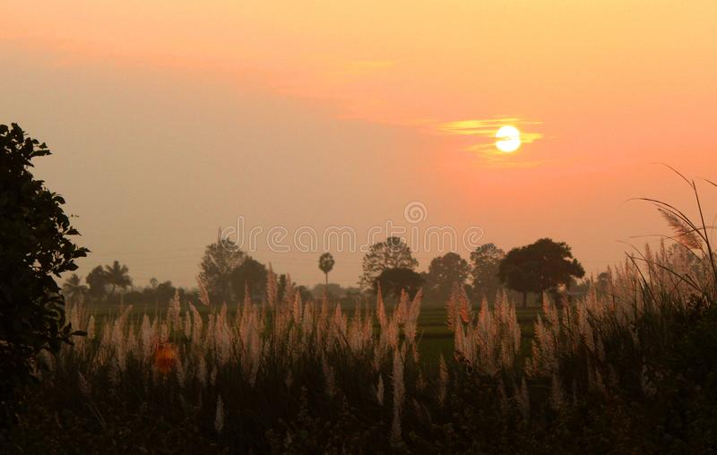 Reeds in the wind with sunset sky. royalty free stock images