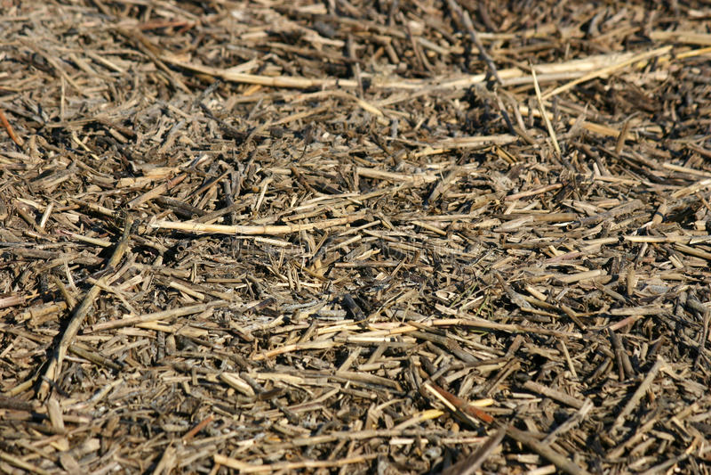 Reeds Debris stock images