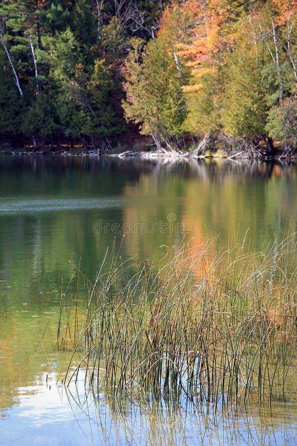 Free Reeds In Lake Royalty Free Stock Photo - 16605605
