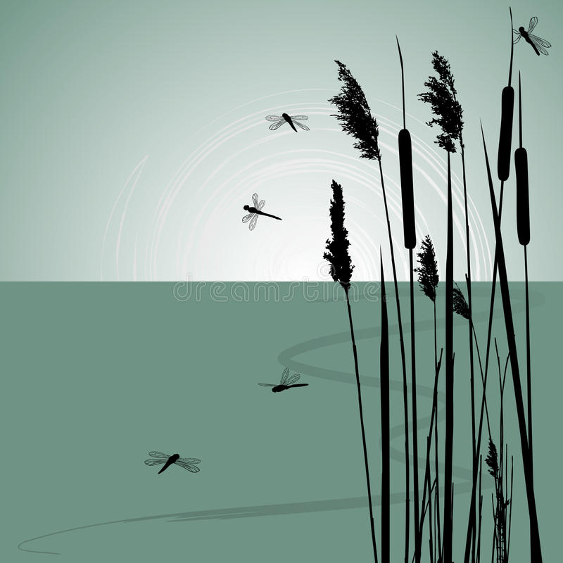 Free Reeds In The Water And Few Dragonflies Royalty Free Stock Images - 25880849