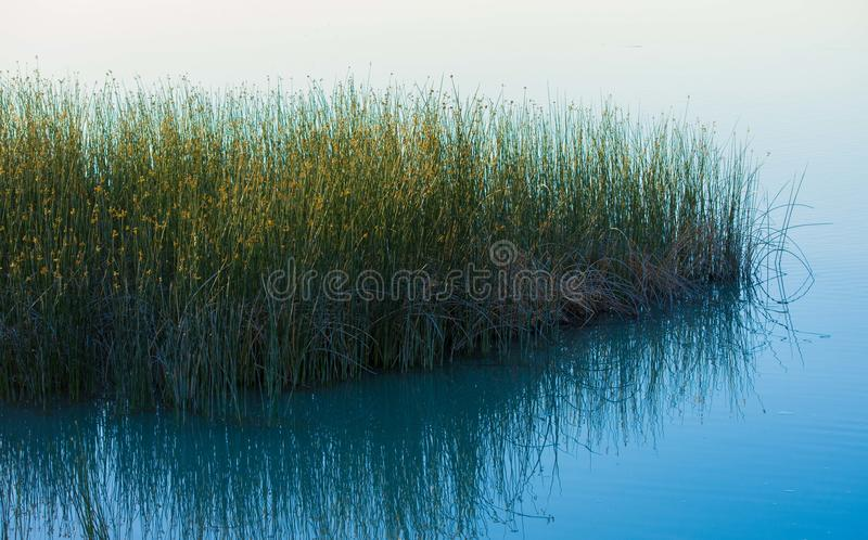 Reeds Lake. Color Reflection Still Water royalty free stock image