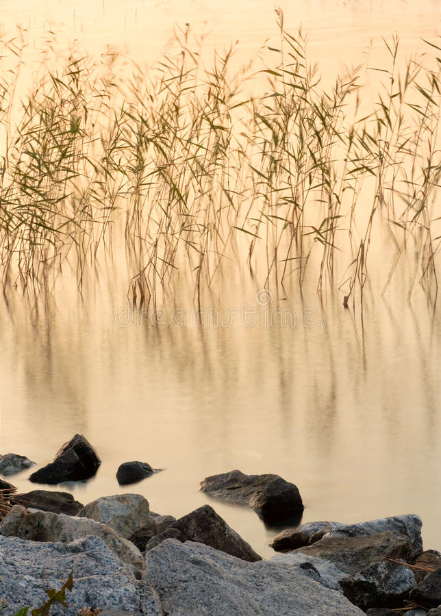 Download Reeds in lake at sunset stock photo. Image of rocky, dusk - 15060892