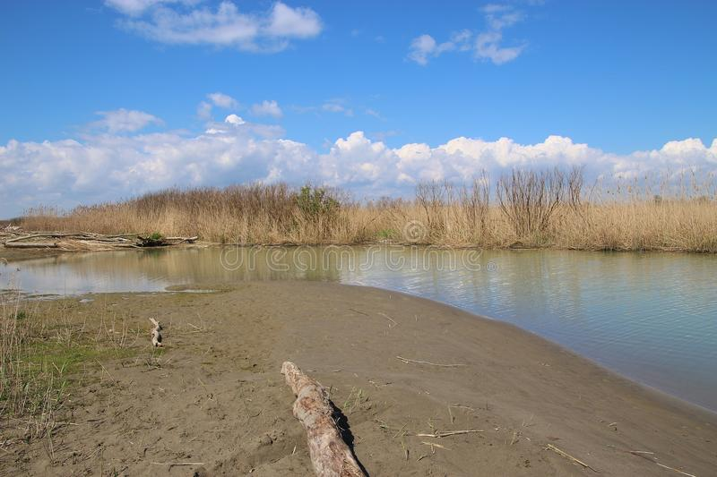 Reeds and marshland in the nature reserve Delta del Po di Veneto. Italy. Reeds and marshland in the nature reserve Delta del Po di Veneto. Here an arm of the Po stock photo