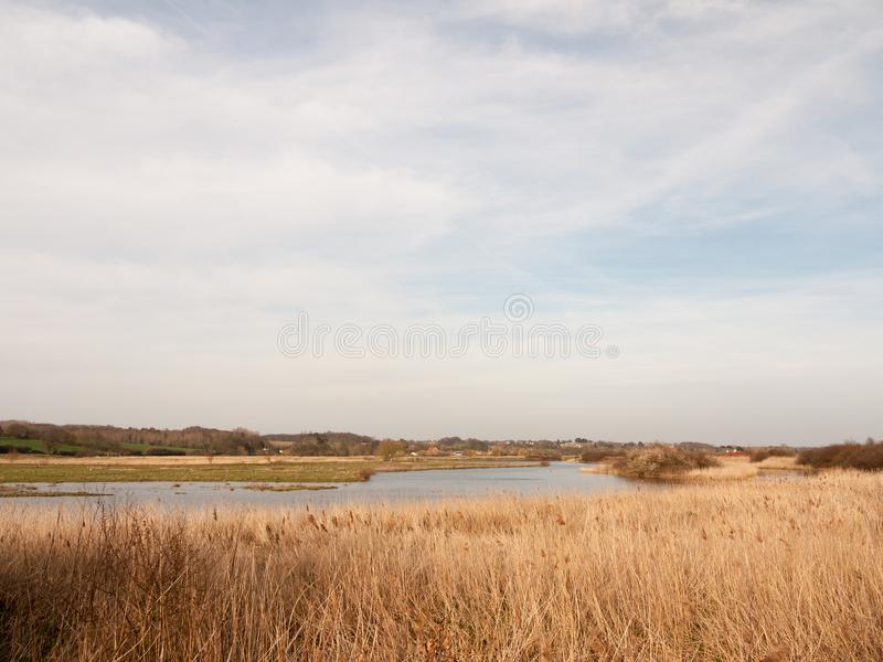 reeds nature growing side bank of river stream water sky blue clouds spring background royalty free stock image