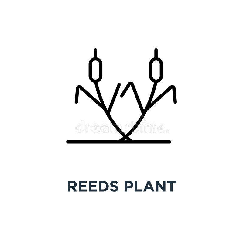 Reeds plant icon. Linear simple element illustration. Cattail co stock illustration