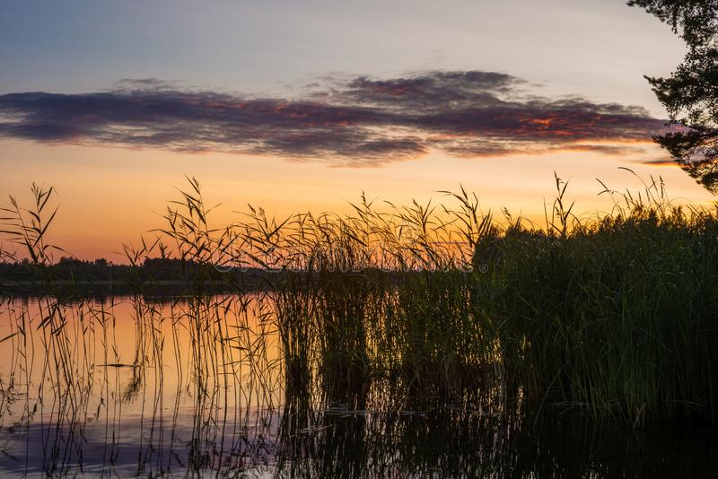 Reeds plants on the shores of the calm Saimaa lake in Finland under a nordic sky on fire  - 2. Reeds plants on the shores of the calm Saimaa lake in Finland stock images