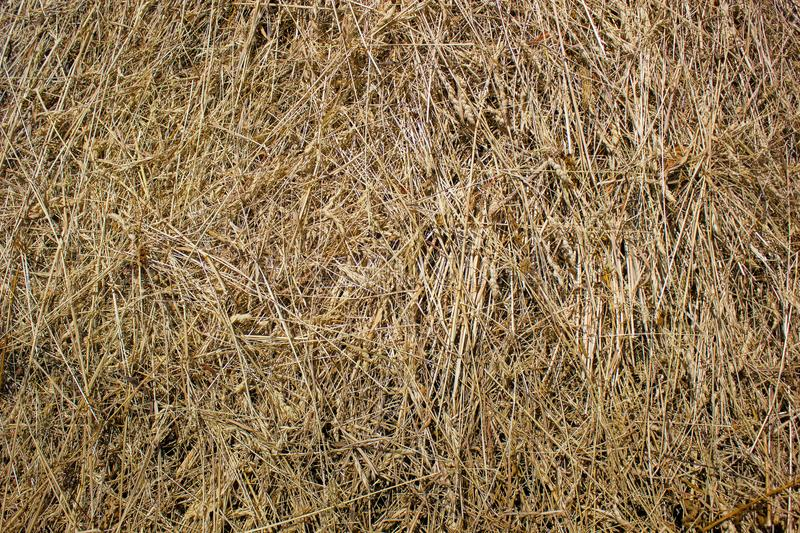 Straw, dry straw texture background, vintage style for design. royalty free stock images