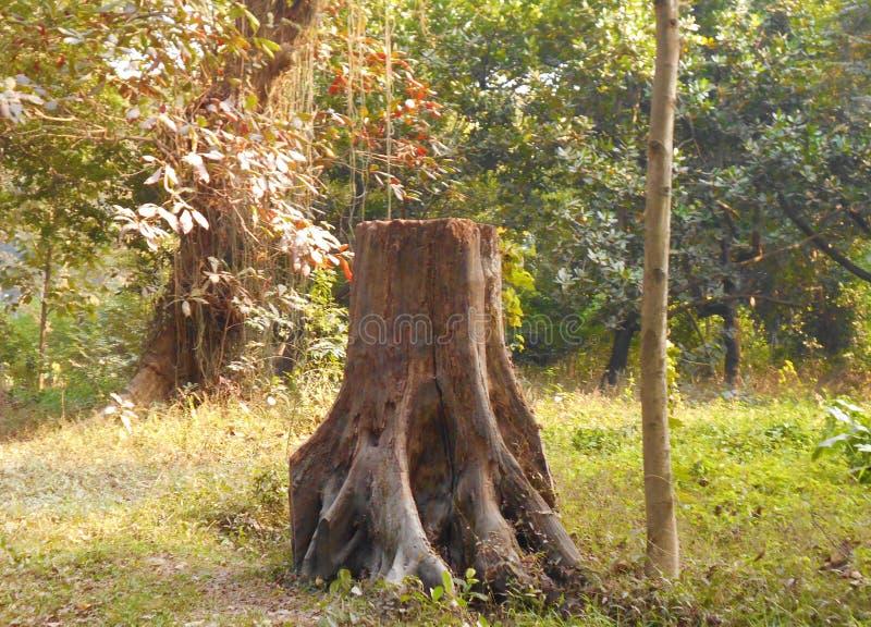 Reeds vernietigde boomboomstam stock afbeeldingen