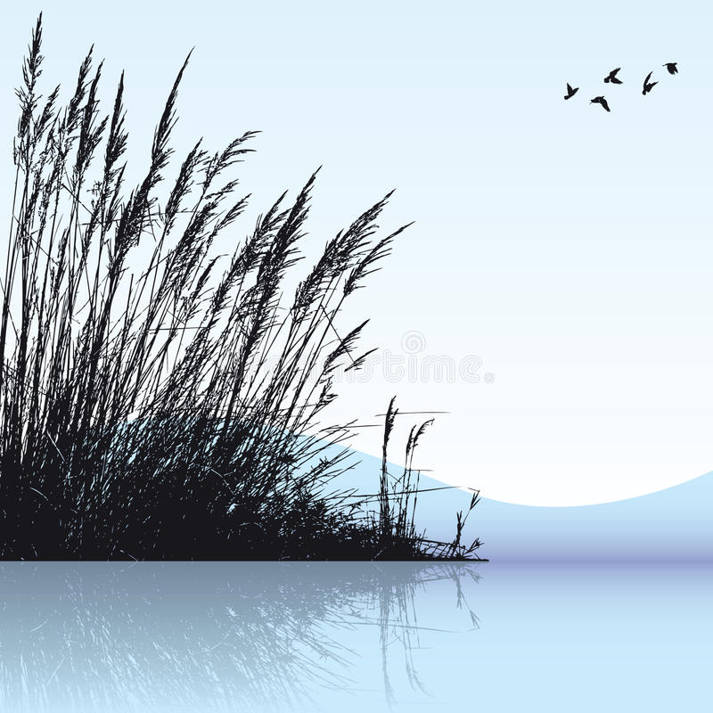 Download Reeds In The Water stock vector. Image of background - 11092516