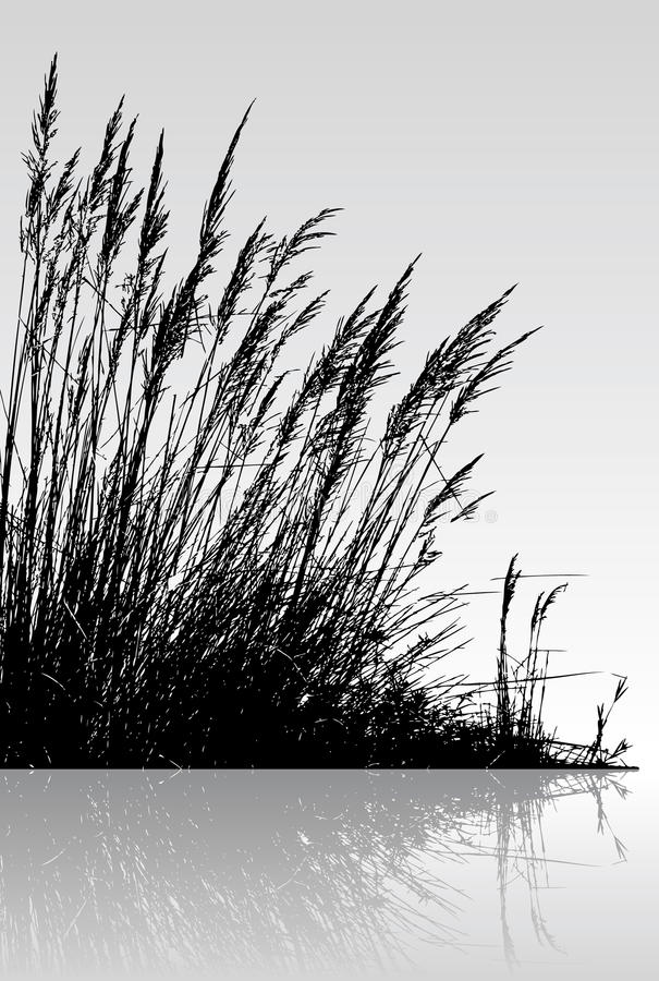 Download Reeds In The Water Stock Photography - Image: 9636282