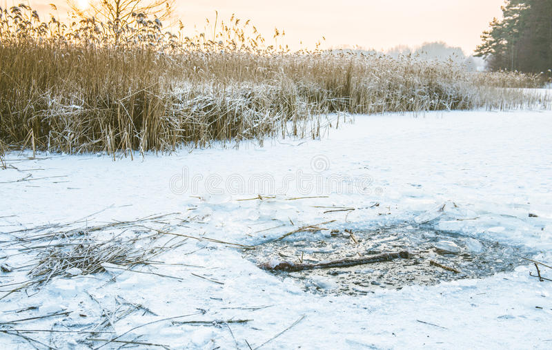 Reeds in winter frost and lake royalty free stock photos