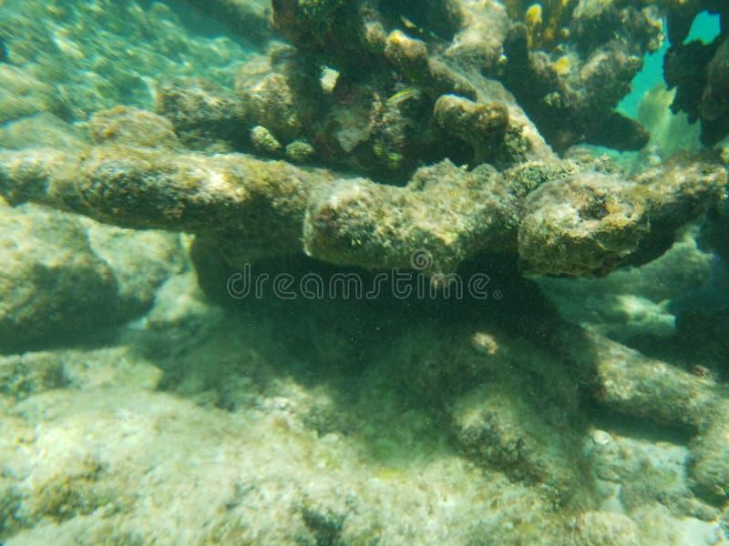 reef immagini stock