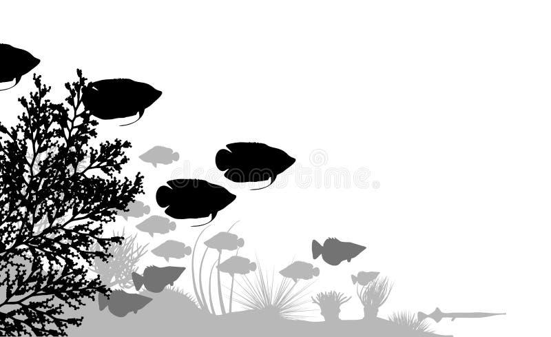 Reef vector illustration
