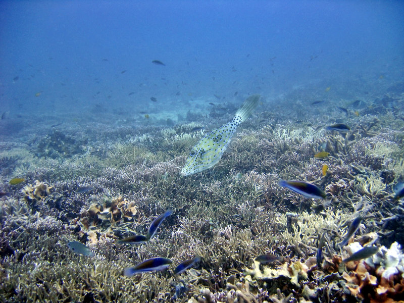 Download On the Reef stock image. Image of aquatic, fishes, marine - 226137