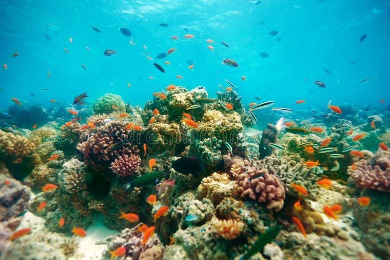 Download The reef stock image. Image of goldfish, marine, exotic - 22854035