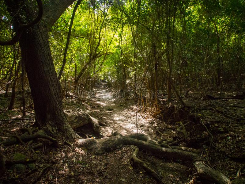 Reef Bay Trail, St. John, U.S. Virgin Islands National Park. A section of the Reef Bay Trail in U.S. Virgin Islands National Park on St. John stock photos
