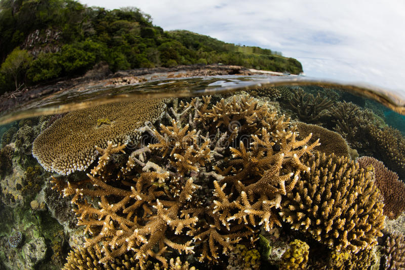 Reef-Building Corals in Shallow Water royalty free stock photography