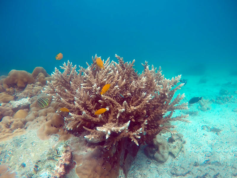 Reef coral and small fish swimming stock images