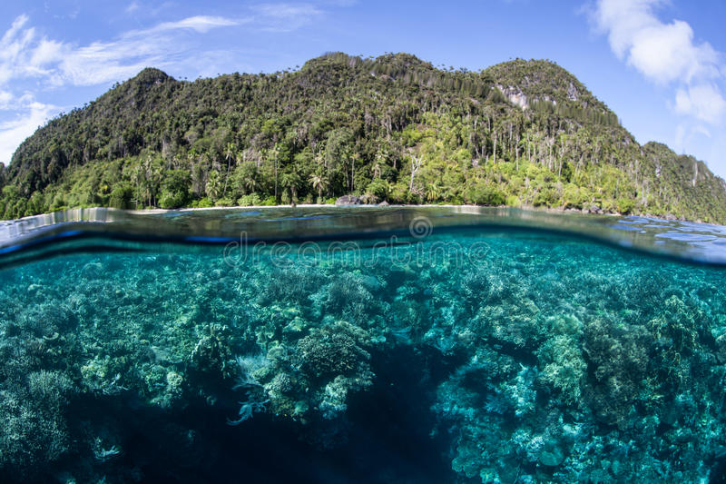 Reef and Island in Raja Ampat. Corals grow in shallow water in Raja Ampat, Indonesia. This remote region is known for its incredible marine biodiversity royalty free stock image