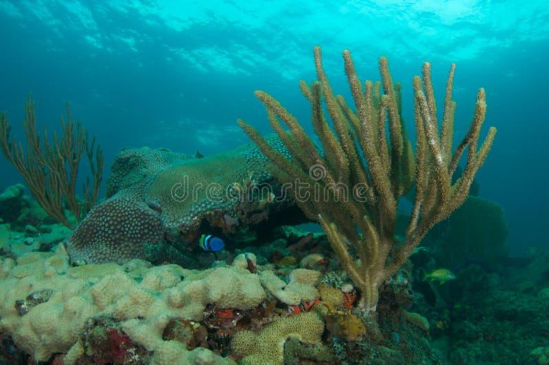 Reef Ledge composition.