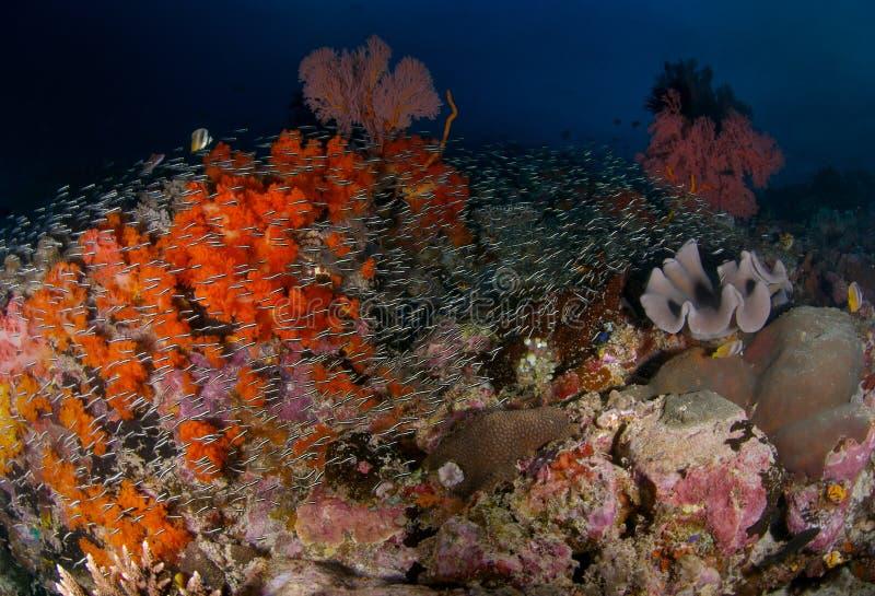 Reef Scene royalty free stock image