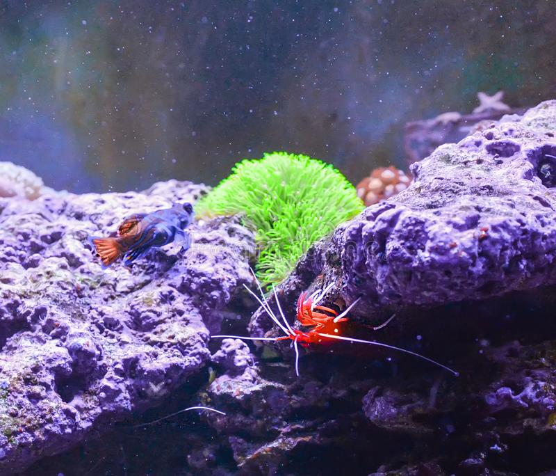 Live Shrimp Stock Images - Download 1,656 Royalty Free Photos