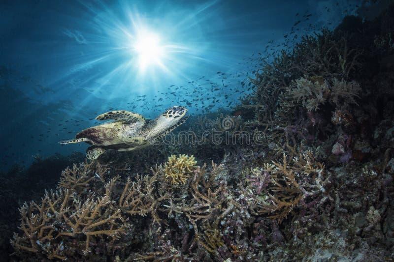 Reef view stock photo