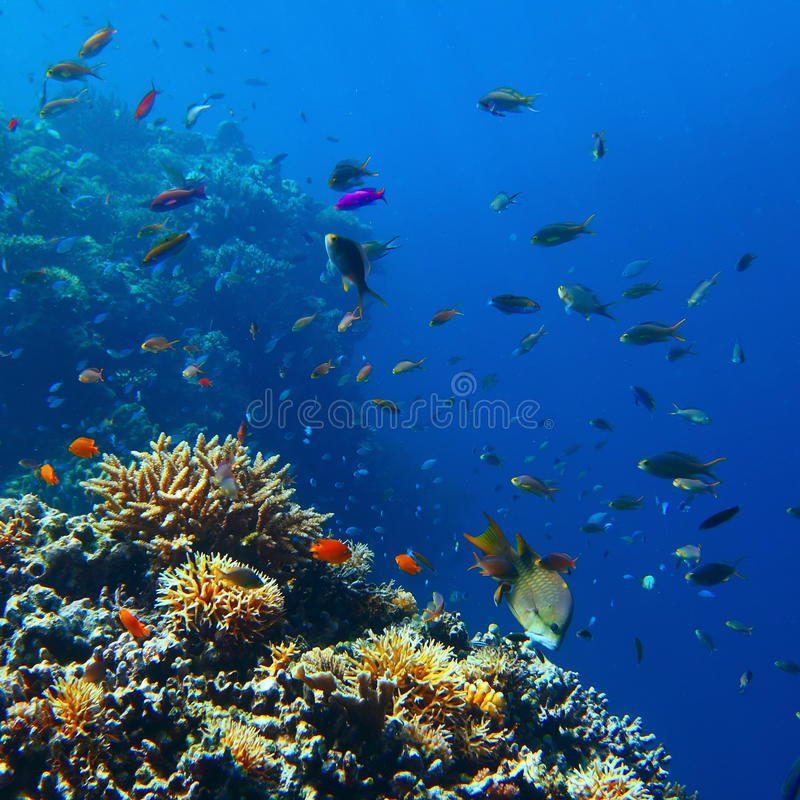 Reef stock photography