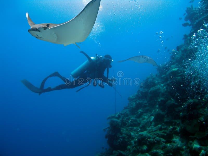 ReefBats imagen de archivo