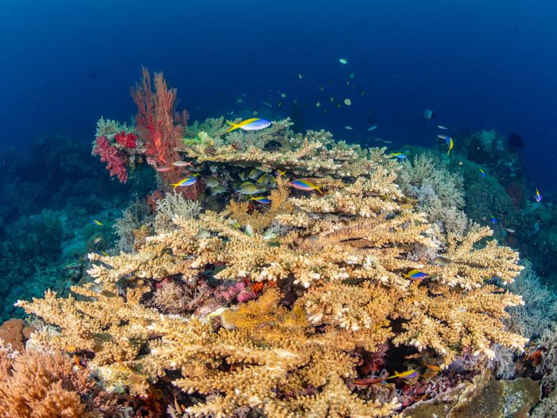 Richest reefs in the world. Misool, Raja Ampat, Indonesia. The reefs in the Misool Marine Protected Area within Raja Ampat, Indonesia, are the richest on earth stock photography