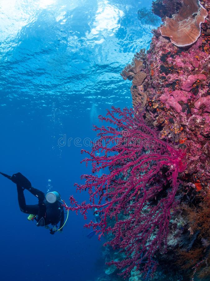 Authentic outstanding natural beauty. Misool, Raja Ampat, Indonesia royalty free stock photography