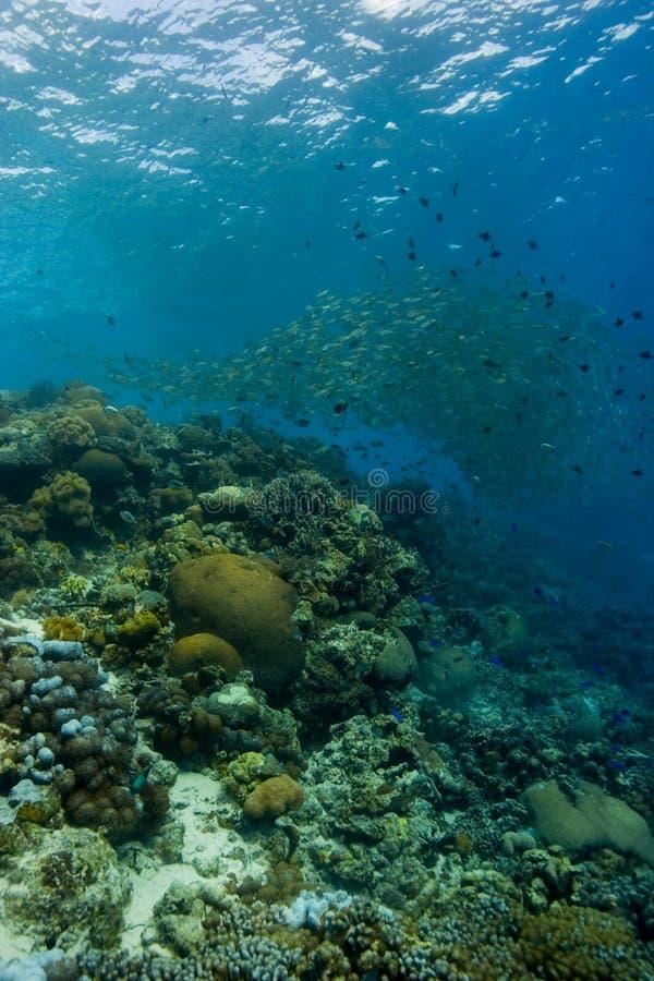 Reefscape com banco de areia da caranga imagens de stock