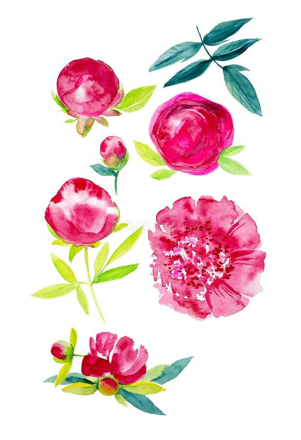 Reeks abstracte rode pioenbloemen met bladeren Waterverfillustratie op witte achtergrond wordt geïsoleerd die royalty-vrije illustratie