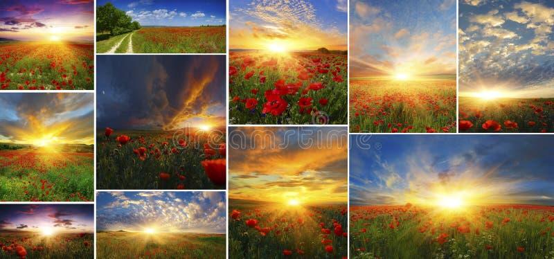 Reeks achtergronden van papavers met het toenemen zon stock afbeeldingen
