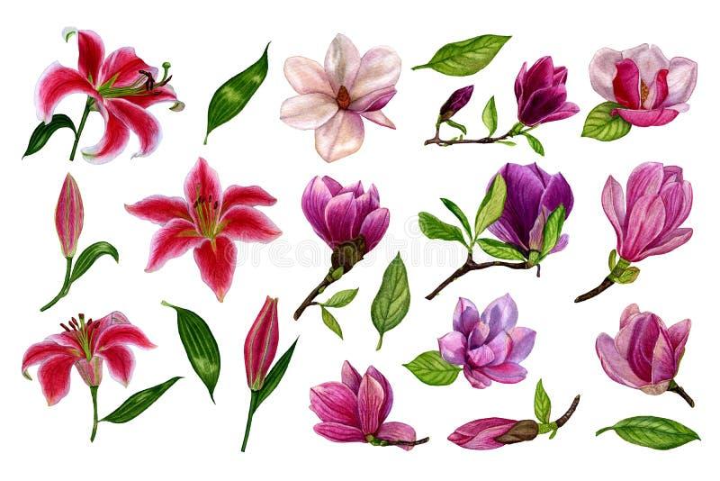 Reeks afzonderlijke elementen van bloemen van lelies en magnolia watercolour Hand getrokken illustratie Ontwerpelementen op een w royalty-vrije illustratie