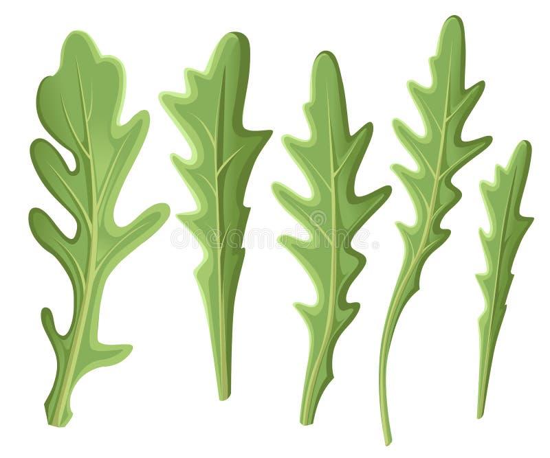 Reeks arugularucola, de verse groene die bladeren en overzichten van de raketsalade over witte achtergrond wordt geïsoleerd Vecto vector illustratie