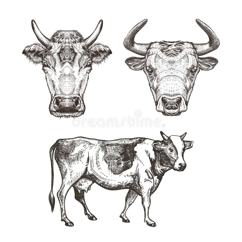 Reeks beelden van koeien Koeien en stier schetsgrafiek stock illustratie