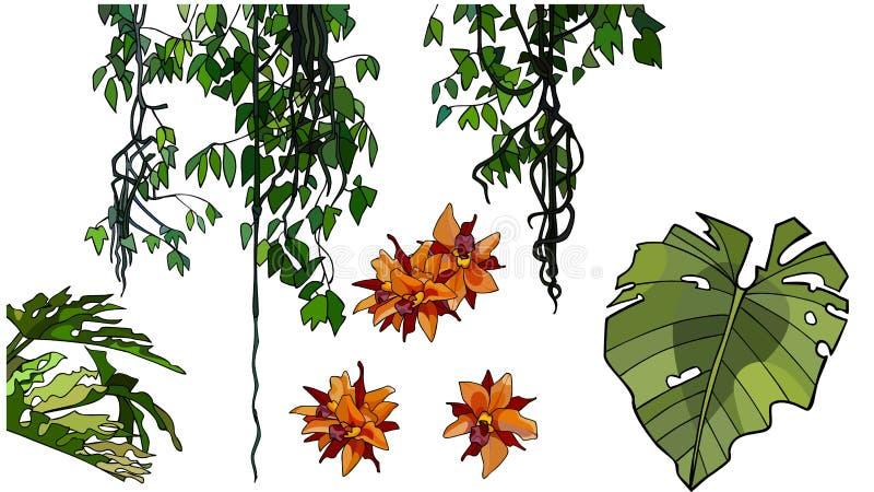 Reeks beeldverhaalelementen van takken met bladeren en bloemen van tropische installaties stock illustratie