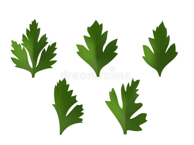 Reeks bladeren van koriander of peterselie vector illustratie