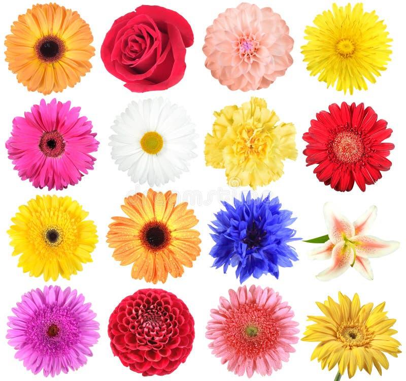 Reeks bloemen royalty-vrije stock afbeelding