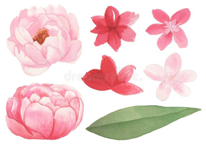 Reeks bloemen, bladeren en takkenelementen vector illustratie