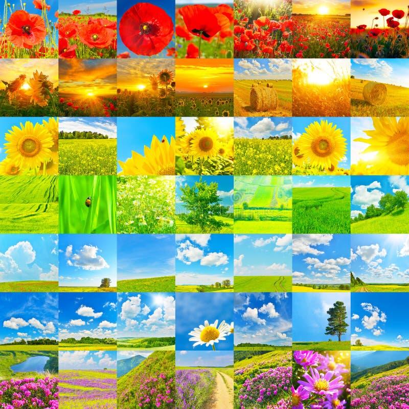 Reeks bloemen, groene gebieden in de lente en hooibergen stock foto