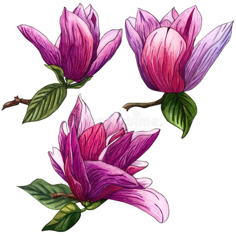 Reeks bloemen van de waterverf roze Magnolia Magnoliatak met Bloemen en Bladeren stock illustratie