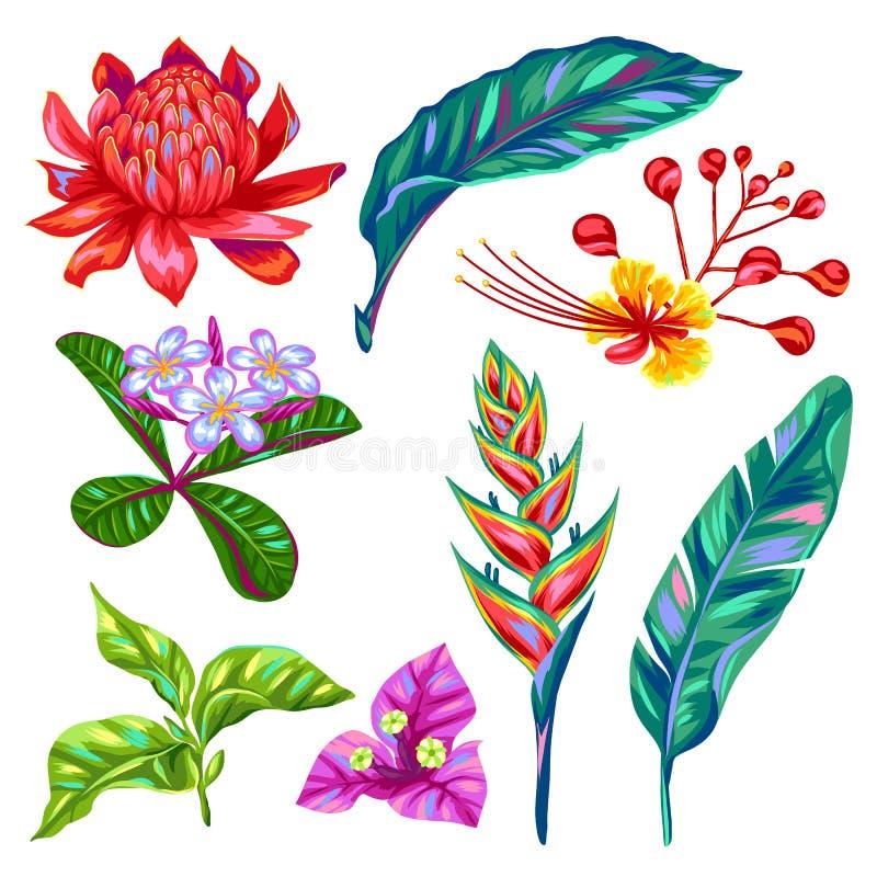 Reeks bloemen van Thailand Tropische veelkleurige installaties, bladeren en knoppen royalty-vrije illustratie