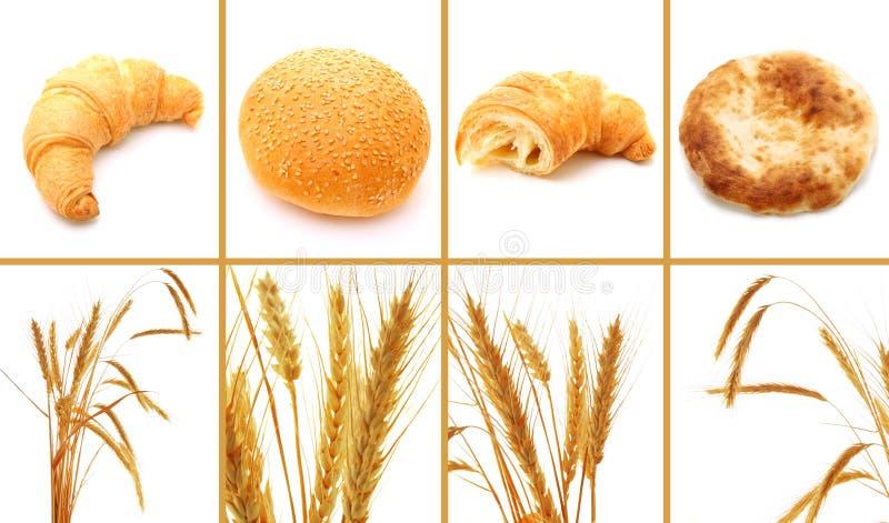 Reeks brood en graangewassen die op wit wordt geïsoleerdn royalty-vrije stock afbeelding