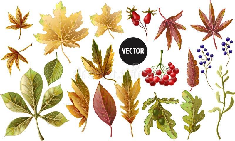 Reeks de herfst gele bladeren en bessen Vector illustratie stock illustratie