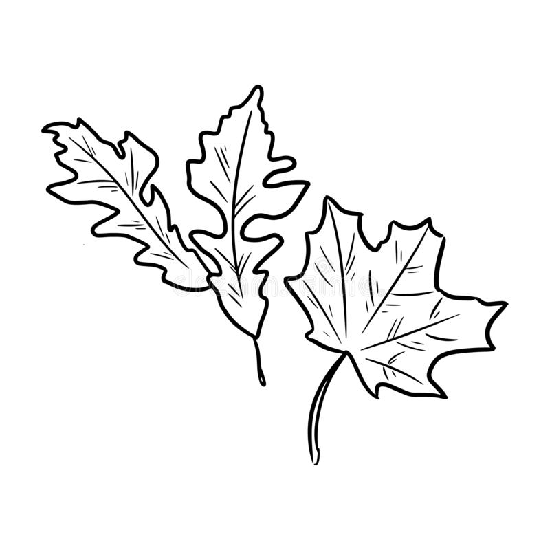 Reeks de herfst gevallen bladeren Geïsoleerd schetsbeeld vector illustratie