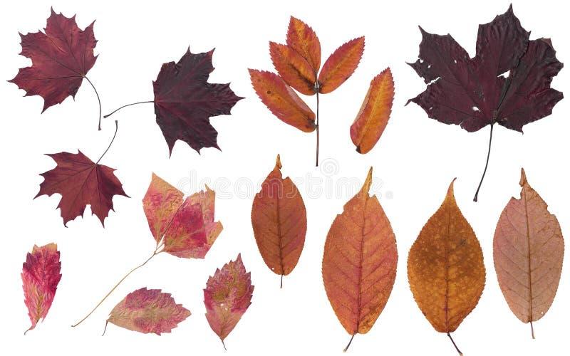 Reeks de herfstbladeren Kleuren van de herfst Herbarium van heldere kleuren stock afbeelding