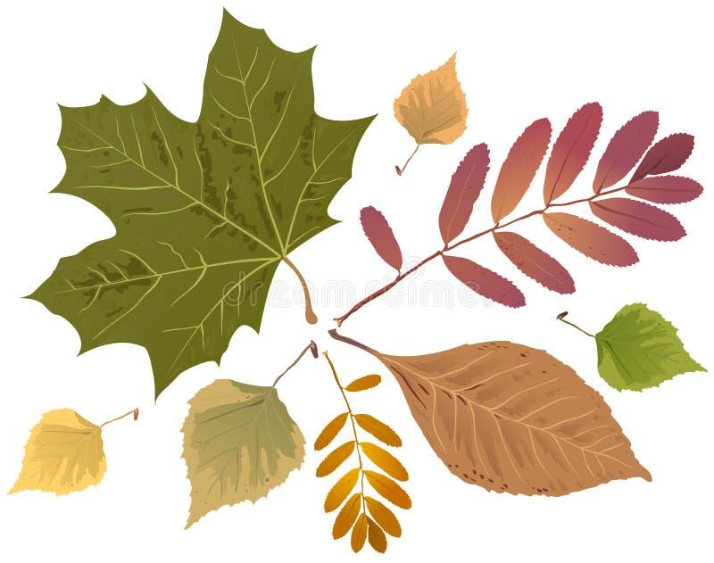 Reeks de herfstbladeren Lijsterbessenblad, esdoornblad, berkblad royalty-vrije illustratie