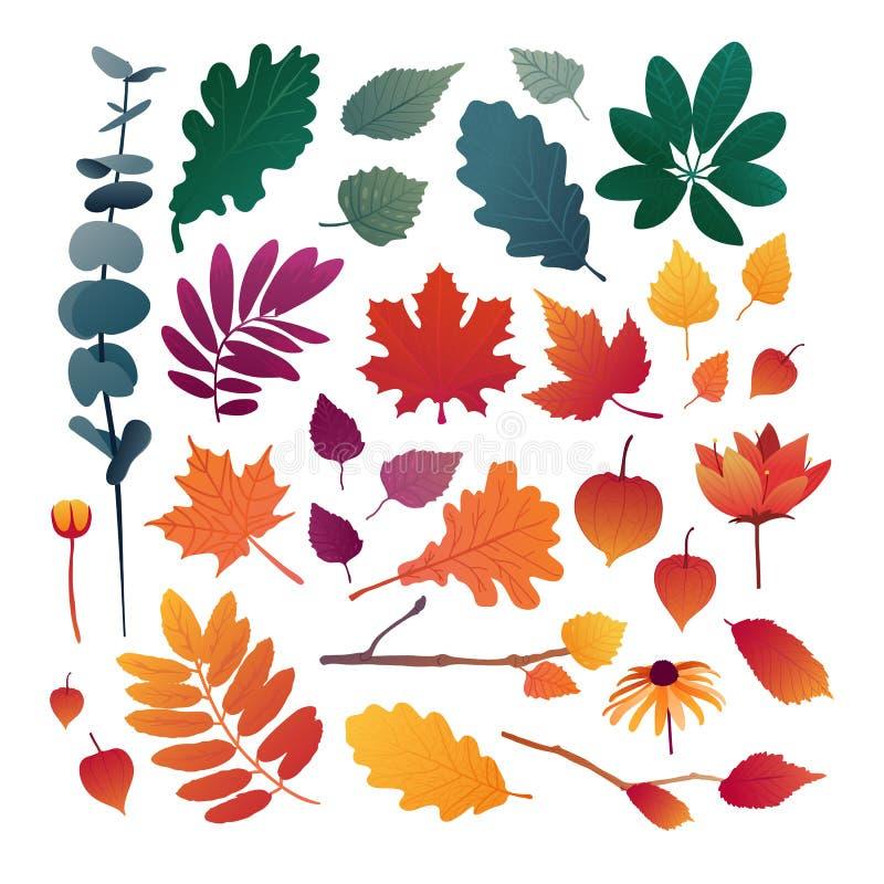 Reeks de herfstbladeren Ontwerpelementen van rode kleur voor het de herfstseizoen Silhouetten van esdoornblad, eiken blad, overze stock illustratie
